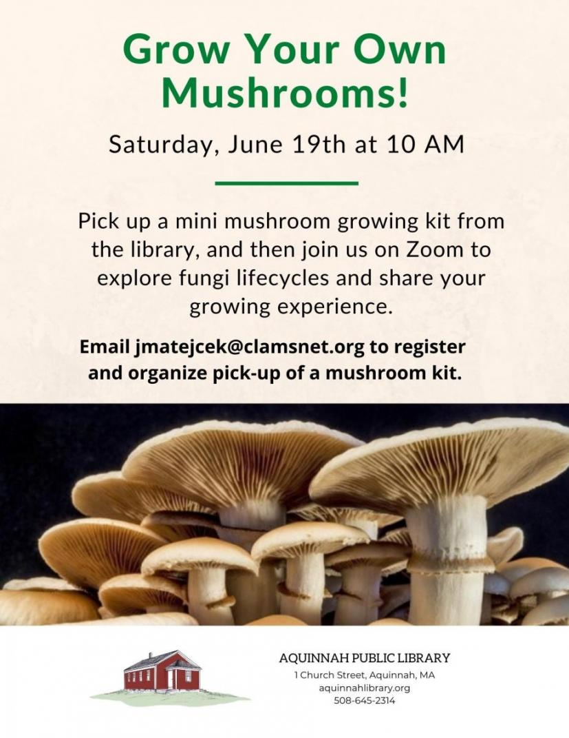 lib mushrooms